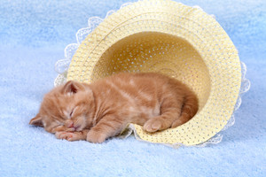 Red kitten sleeping in a straw hat