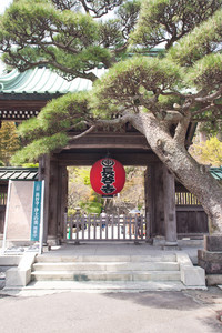 red lantern in front of temple kamakura