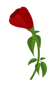 Red Rose Vector Design