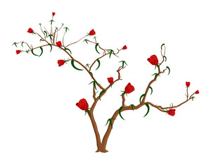 Red Roses Branches