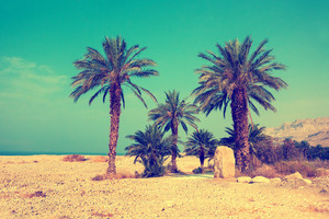 Retro background with palm trees against sea in dessert