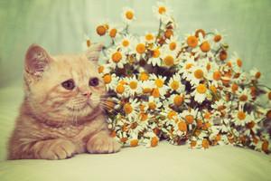Retro portrait of cute  kitten relaxing near flowers