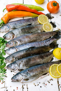 Trout Fish