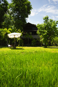 Rice field front of vintage wood house Thailand style