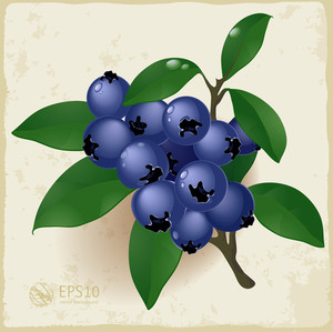Ripe And Fresh Blueberries And Leaves. Vector.