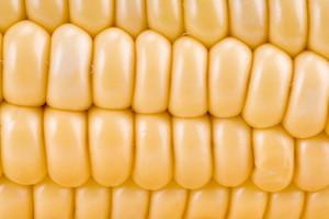 Ripe Corn Closeup
