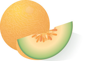 Ripe Melon. Vector.