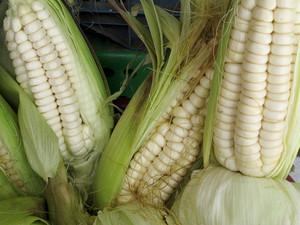 Ripe Peruvian Corn