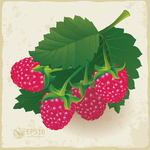 Ripe Raspberry With Leaf. Vector.