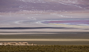 Road through colorful flatland