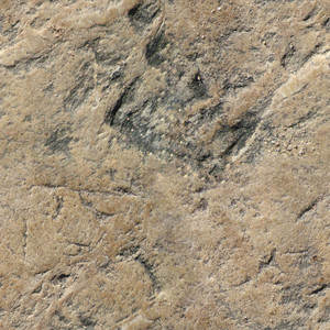 Rock Seamless Texture