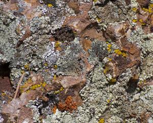 Rock Texture 6