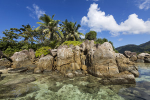 Rocks and tropical vegetation along the coast