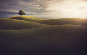 Rolling hills with a single tree at the horizon