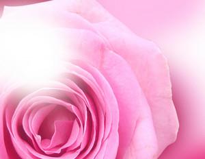 Rose Close-up Background