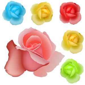 Rose Vectors