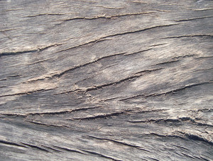 Rough_oak_texture