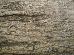 Rough_wooden_bark_surface