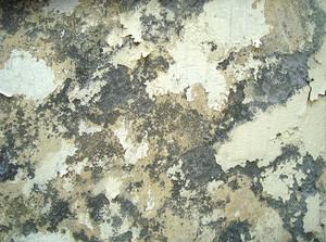 Ruins_wall