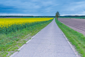 Rural asphalt road near fields in springtime. Calm polish countryside