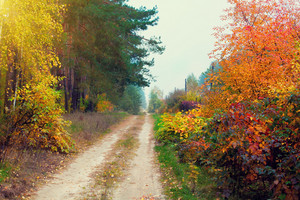 Rural dirt road in autumn with colorful trees