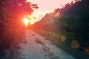 Rural landscape in summer. Dirt road at sunset