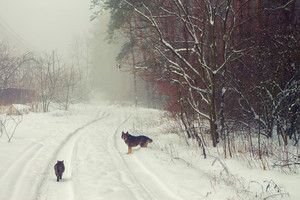 Rural winter snowy landscape with cat and dog