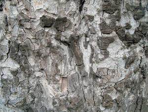 Rusty_wood_texture