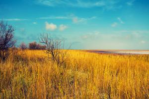 Salty lake in prairie
