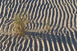 Sand Bank