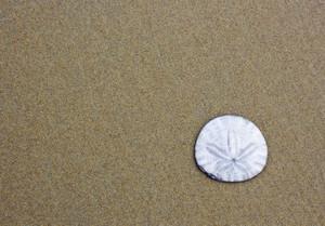 Sand Texture 7