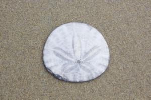 Sand Texture 9