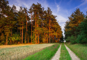 Sandy rural road near forest in countryside landscape
