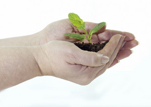 Save Plant 204