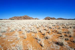 Scrub grass on the vast savanna