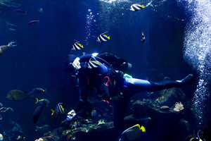 Scuba Diving In Aquarium