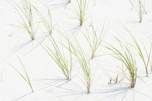 Sea grass at beach location