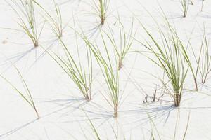 Sea grass at beach location