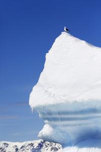 Seabird perched atop a sunlit iceberg