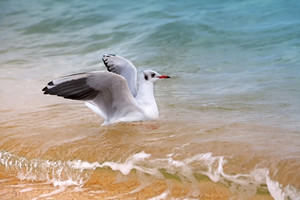 Seagull floating in the sea