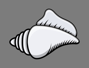 Seashell - Vector Illustration
