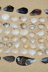 Seashells Background On Sand