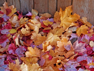 Seasons Fall Leaves Background