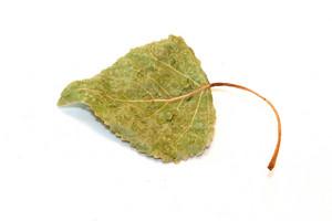 Seasons Green Leaf