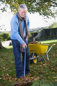 Senior man collecting autumn leaves in garden