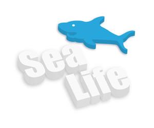 Shark Fish Sea Life