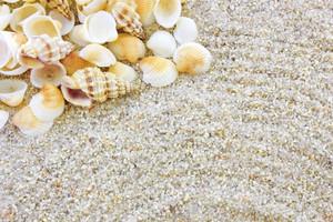 Shells 211