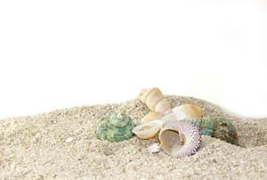 Shells 22
