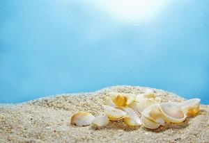 Shells 24