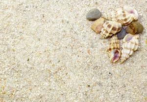 Shells 29